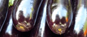 Maltagliati-alla-crema-di-melanzane-Ricette-Al-Microonde-300x128 Maltagliati alla crema di melanzane